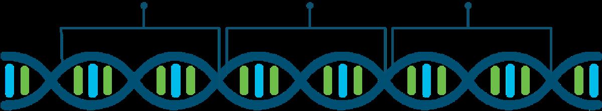 DNA graphics_1200x223